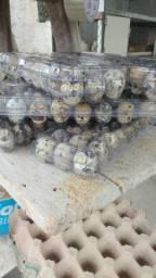 Vendas de ovos de codornas são Gonçalo