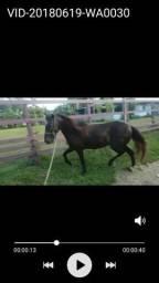 Lindo cavalo!!! vendo ou negócio.
