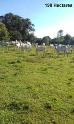 Fazenda no Município Boca do Acre com 198 Hectares - FA0086