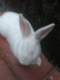 Eu tou doando um coelho