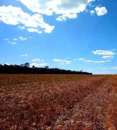 Fazenda, soja em Nova Mutum MT