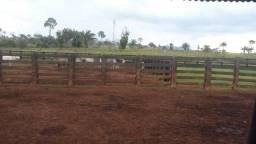 Venda de fazenda e sítios em são félix do xingu pa