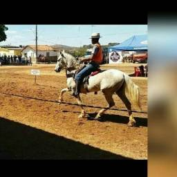 Cavalo marcha batida macia