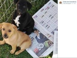Labrador x dog brasileiro zap 859 9180 0109 zapzap gratis uma linda caminha para seu pet
