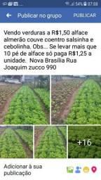 Verduras orgânico
