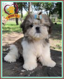 Shih Tzu Wobeto Kennel