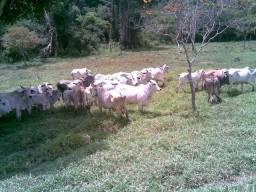 Fazenda Vale do Jequiriça Amargosa