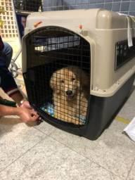 Caixa de Transporte para cães- Kennel- Extra-Grande
