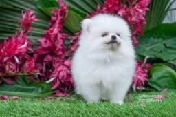 lindo lulu branco