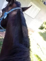 Título do anúncio: Vendo cavalo criolo manso e de laço