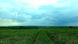 Aarendamento rural, aluguel de pasto em Nova Mutum MT