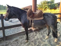 Vendo égua Criola registrada