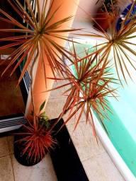 Título do anúncio: Planta com Vaso e Decoração