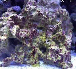 Título do anúncio: Rocha Coral aquário