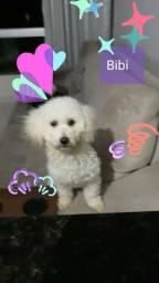 Meu nome é Bibi; estou a procura de um novo lar!!!