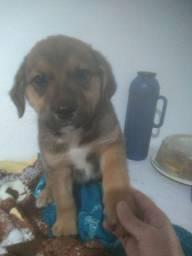 Doação de filhotes de cachorro porte médio