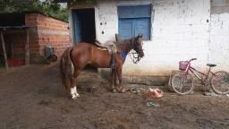 Vendo um cavalo mestiço de manga larga