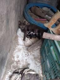 Estou doando essa gata com 4 filhotes