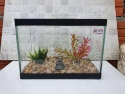 Aquarios para peixes ornamentais