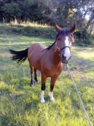 Título do anúncio: Vendo cavalo criolo sem papel