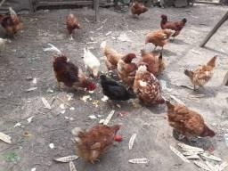 Título do anúncio: Vendo galinhas separadas ou juntas