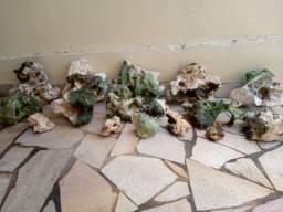 Título do anúncio: Rochas Zanzibar para Aquário