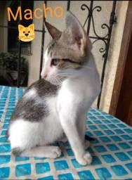 3 Gatinhos lindos para Adoção !!!!!
