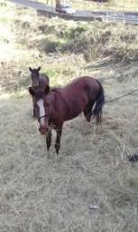 Cavalo de carroça e lida