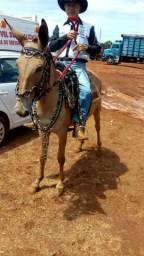 Vendo mula mansa para criança e mulher andar,egua campolina,burro