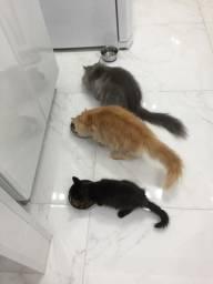 Venda de Gatos e Acessórios dos Gatos