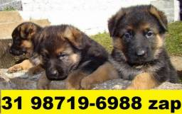 Canil Filhotes Belos Cães BH Pastor Dálmata Boxer Labrador Akita Rottweiler