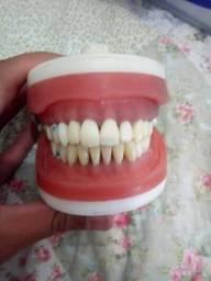 Manequim Odontológico PRODENS