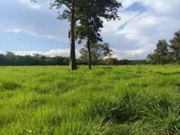 Sitio 80 Hectares 38 km de Cuiabá MT terra muito boa,Bira rio