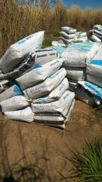 Vende-se semente de Capim Agropol ensacada e costurada