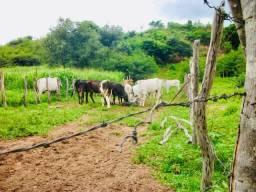 Roça, 14 hectares à venda por R$ 70.000. Tiririca/BA