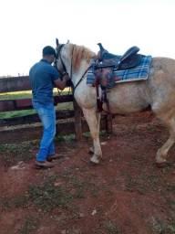Cavalo mangalarga marchador mineiro