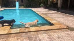 Título do anúncio: Hotel para cães paraíso dos goldens