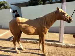 Cavalo Baxeiro !!!