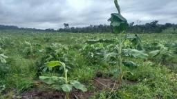 Propriedade rural - 35 hectares - Balsas-MA - Pagamento em até 3X