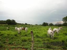 Mega oportunidade de fazenda no Tocantins!