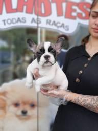 Filhotinhos de Bulldog Francês, no padrão da raça, leia a descrição