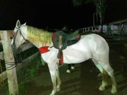 Vende se um cavalo de vaquejada