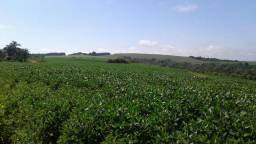 Área Rural para Plantio