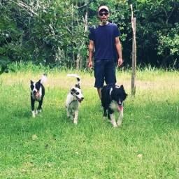 Treinamento Canino / Walking Dog / Adestramento