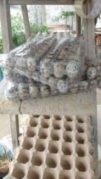 Vendas de ovos de codornas