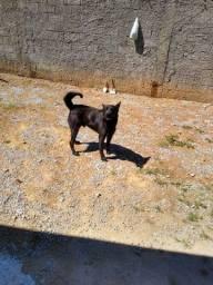 Doa um cachorro capa preta