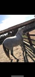 Vendo Cavalo Turdilho
