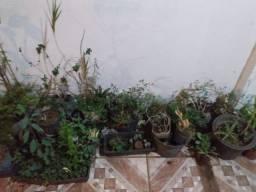 Título do anúncio: Lote de plantas para jardim ao todo 90 vasos