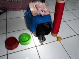 Kit de gato