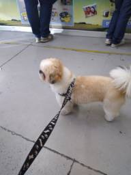 Passeador de cães, Dog Walker Cláudio Schirmer